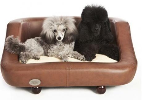 Dog-bedd