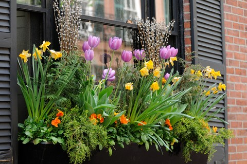 b555_Planting-Window-Boxes