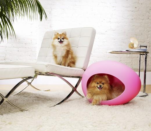 stylish-dog-furniture-3-e1343937470396