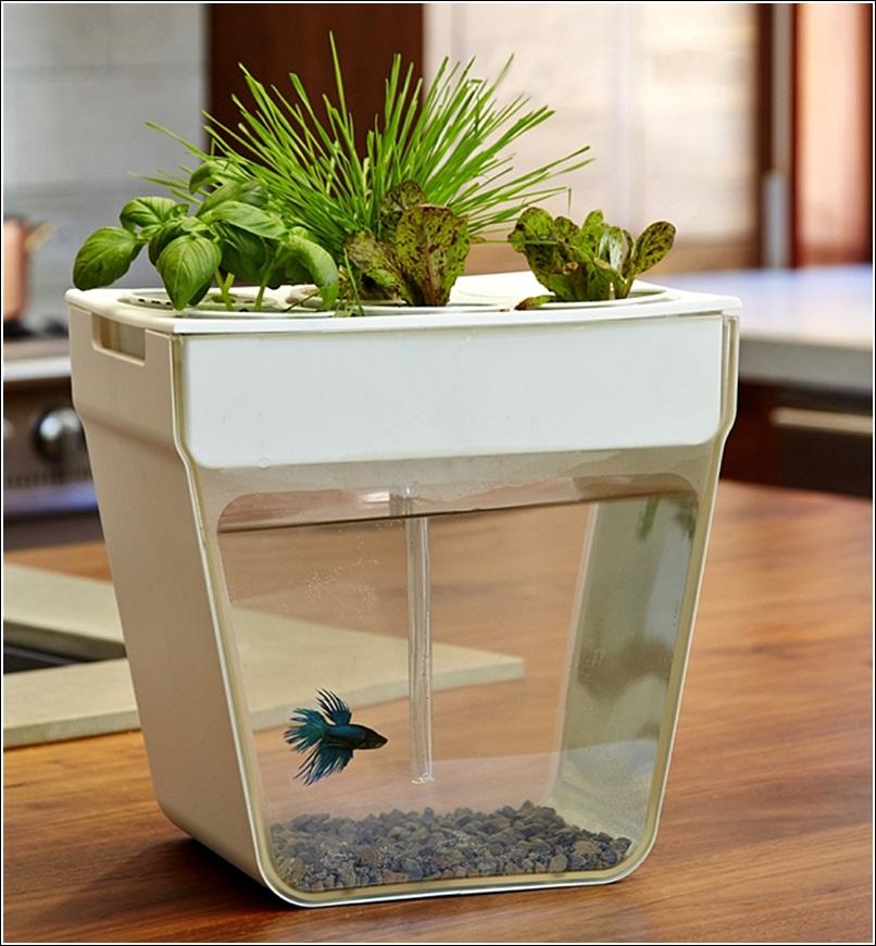 Aquaponic self cleaning aquarium with a mini garden for Mini aquarium
