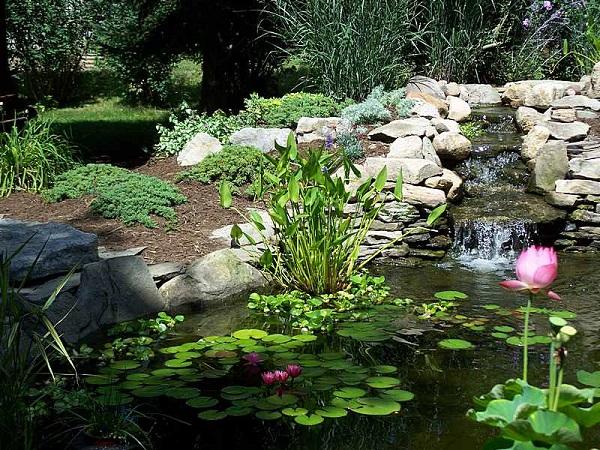 3. Image Source: Your Garden Pond Center