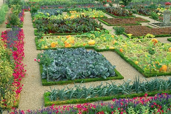Vegetable Garden Design edible landscaping vegetable garden design Simple Vegetable Garden Ideas At Home