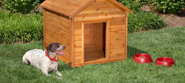 Small And Cute Dog House