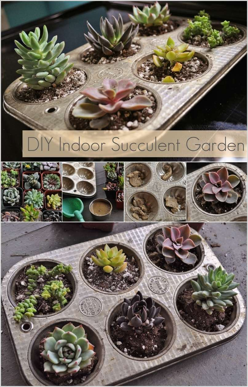 15 wonderful succulent garden ideas for your home for Tray garden designs