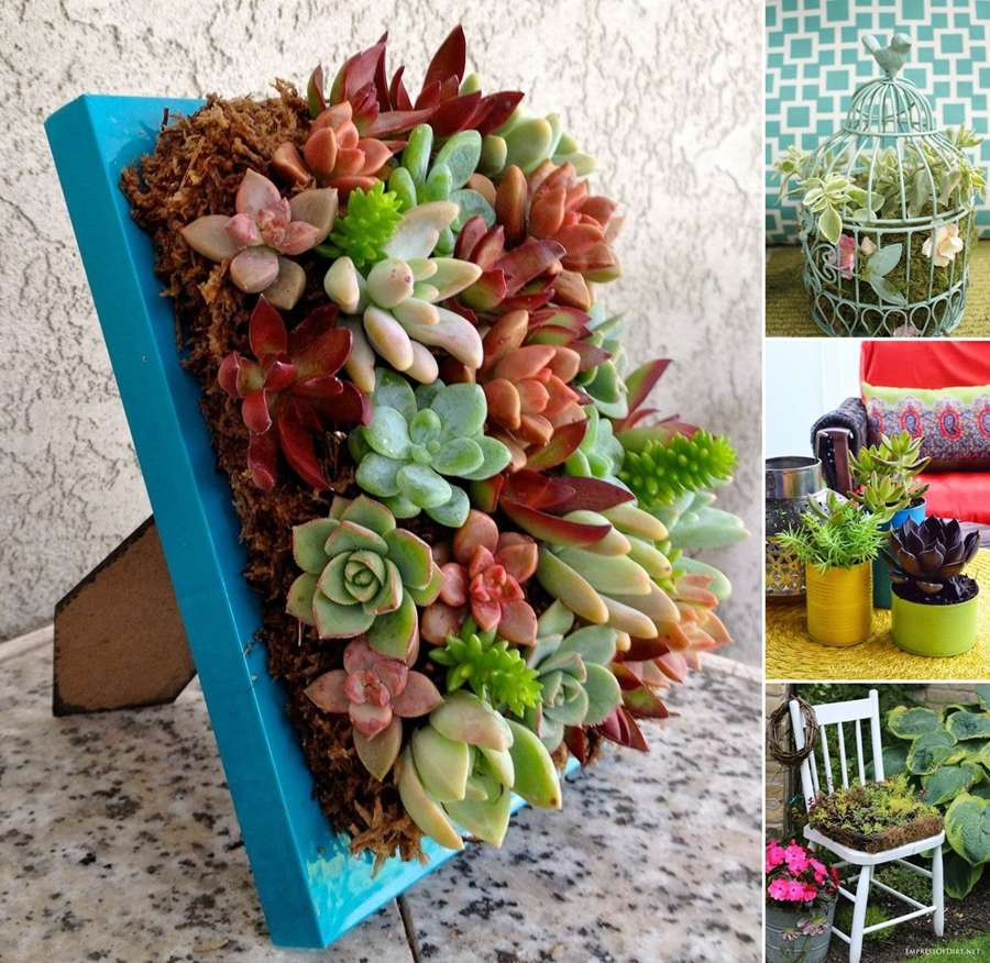 15 Wonderful Succulent Garden Ideas for Your Home