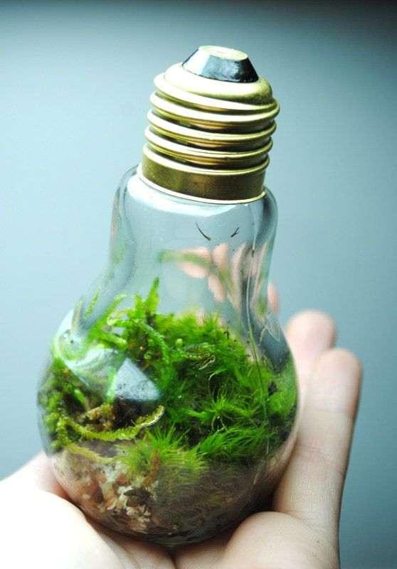 Light Bulb Ecosystem