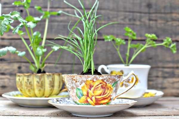 Coffee Mugs Planter