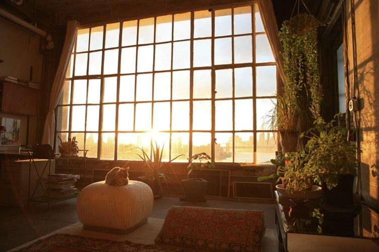 Tall  room with  natural light and plants.