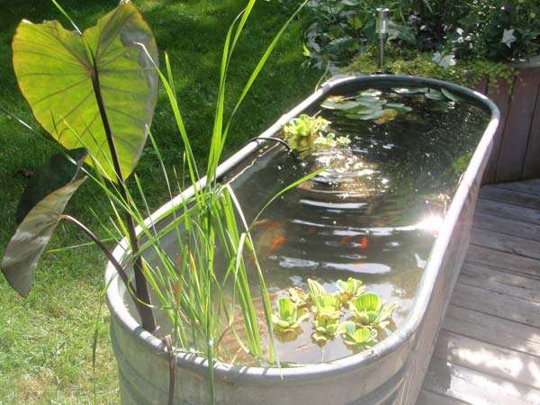 15 awesome small backyard aquarium diy ideas for Fish pond decorations