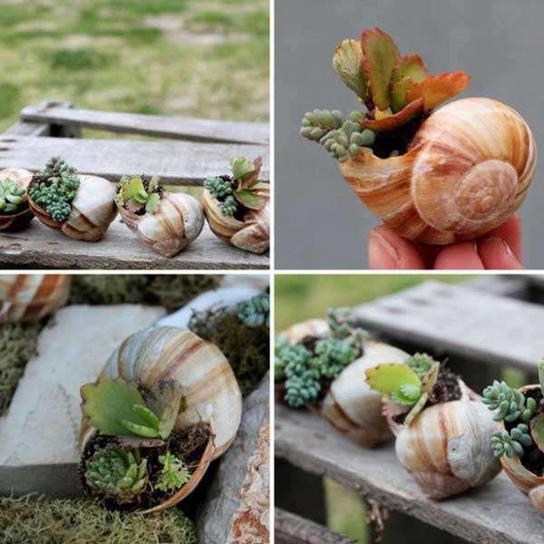 Empty Snail House Pot