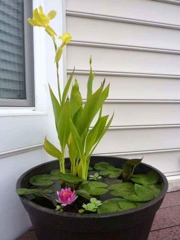 Mini Pond In a Black pot