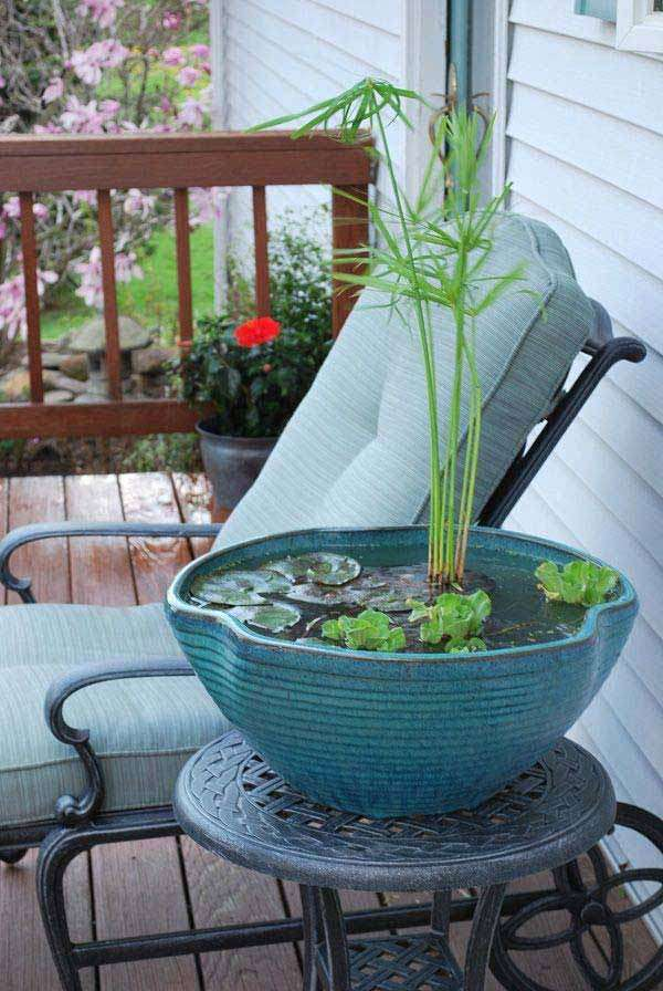 Mini Pond In a Pot