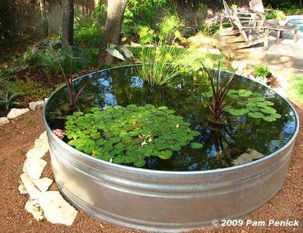 Mini Pond in a steel barel