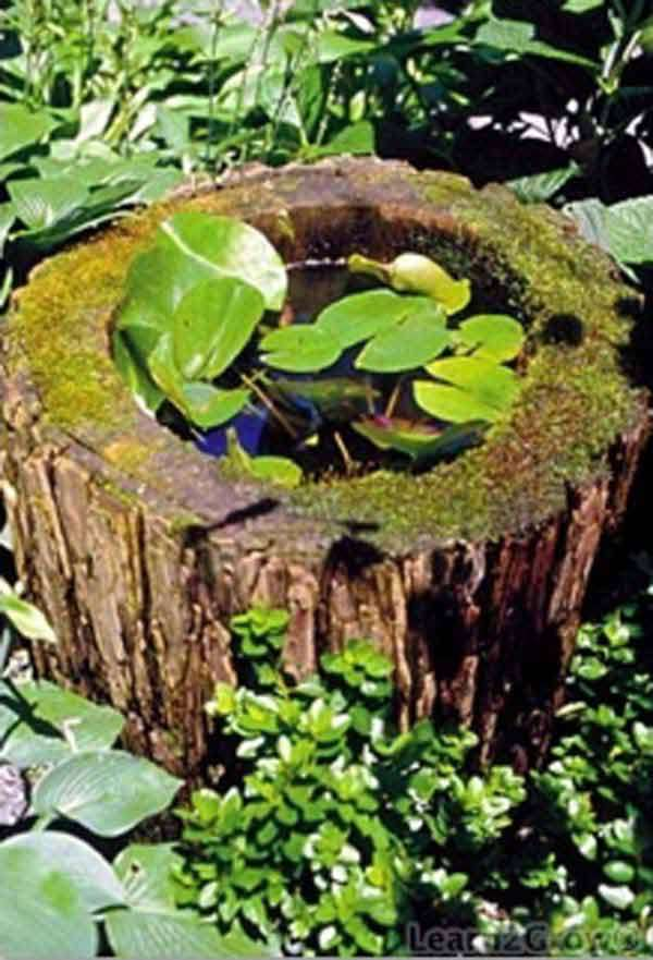 Pond in a wood log
