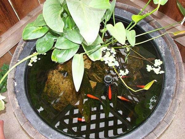 wine barrel fish pond