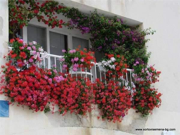 Spectacular-Balcony-Garden-Woohome-12
