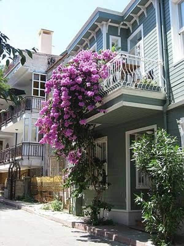 Spectacular-Balcony-Garden-Woohome-9
