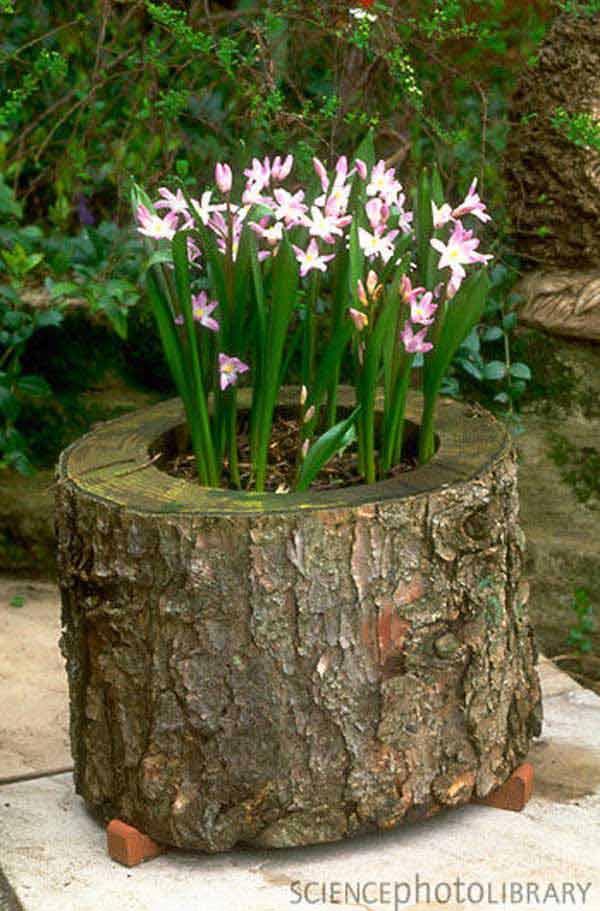 tree stump into a cool flower planter