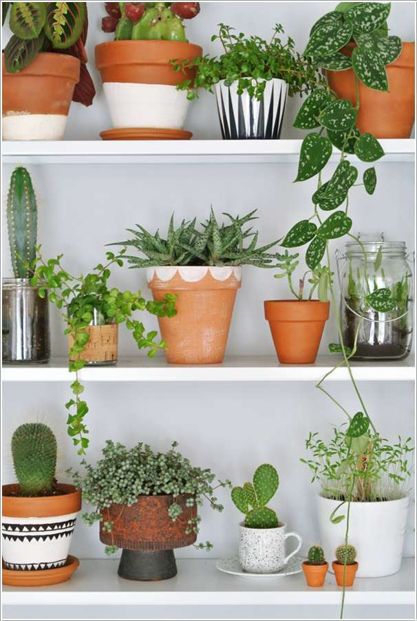 5  10 Incredible Indoor Plant Container Ideas 529
