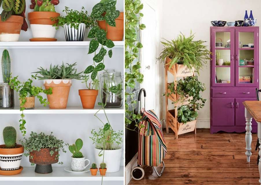 10 Incredible Indoor Plant Container Ideas