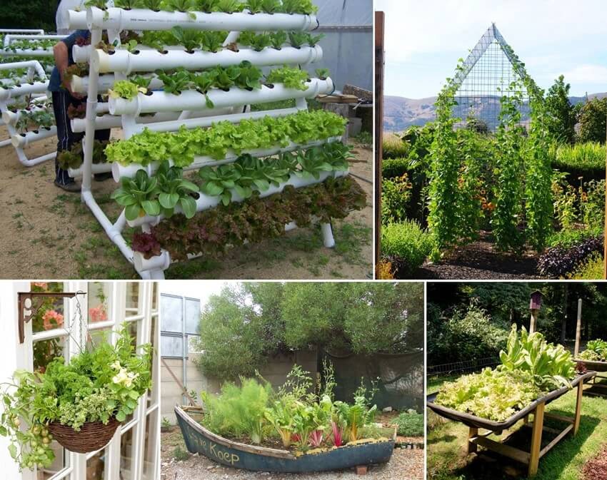 Grow An Unusual Vegetable Garden