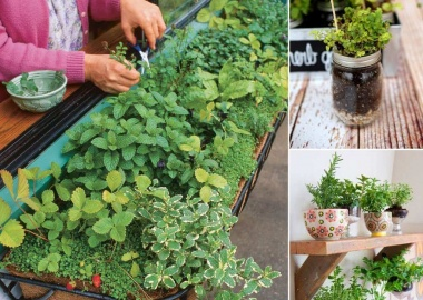 12 Cool Small Herb Gardens That Won't Take Much Space fi