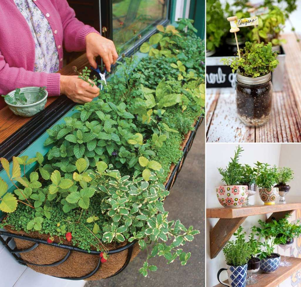 12 Cool Small Herb Gardens That Won T Take Much Space
