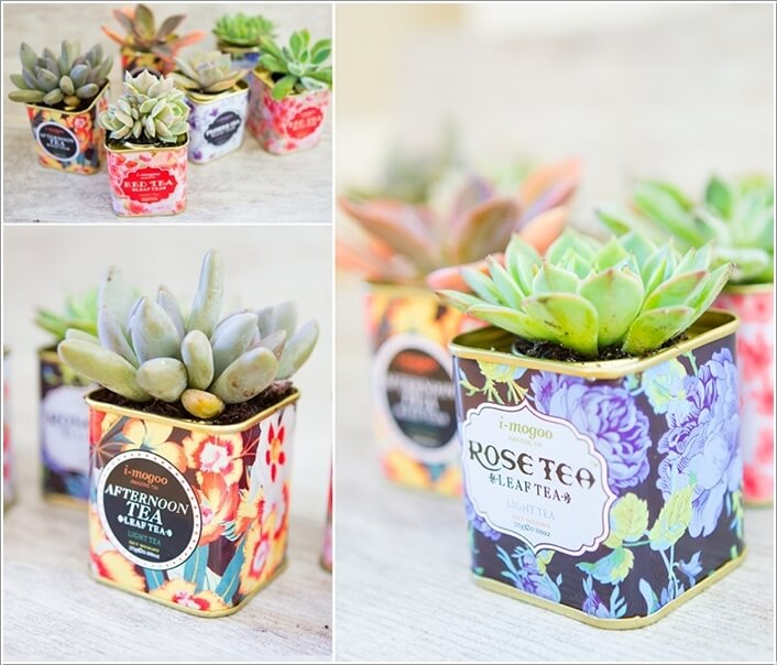 10 Cool Succulent Planter Ideas for Your Home 2