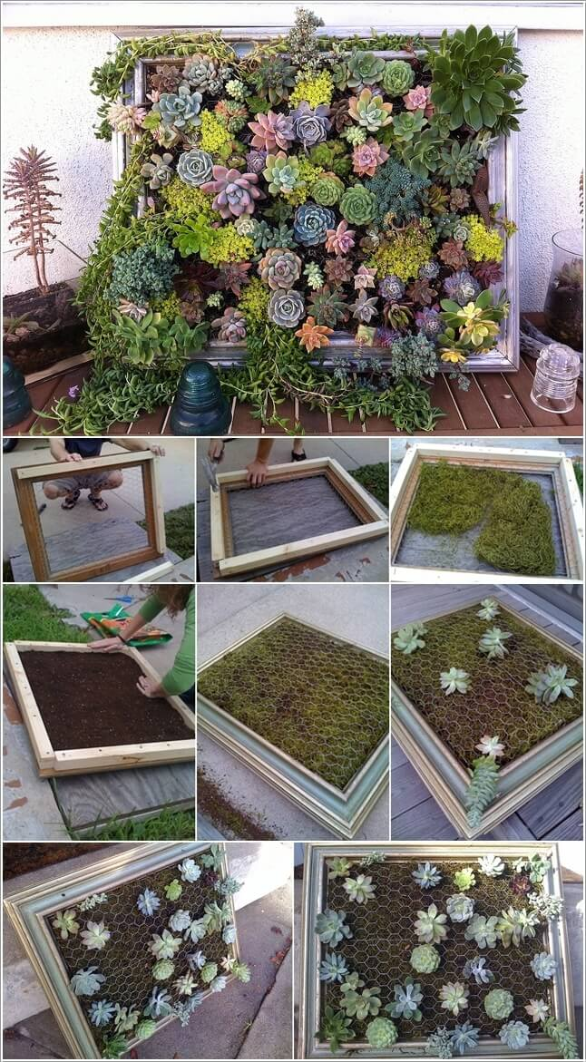 10 Cool Succulent Planter Ideas for Your Home 6