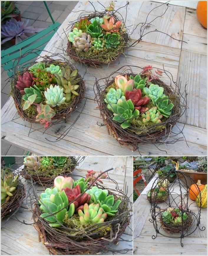 10 cool succulent planter ideas for your home Planters for succulents