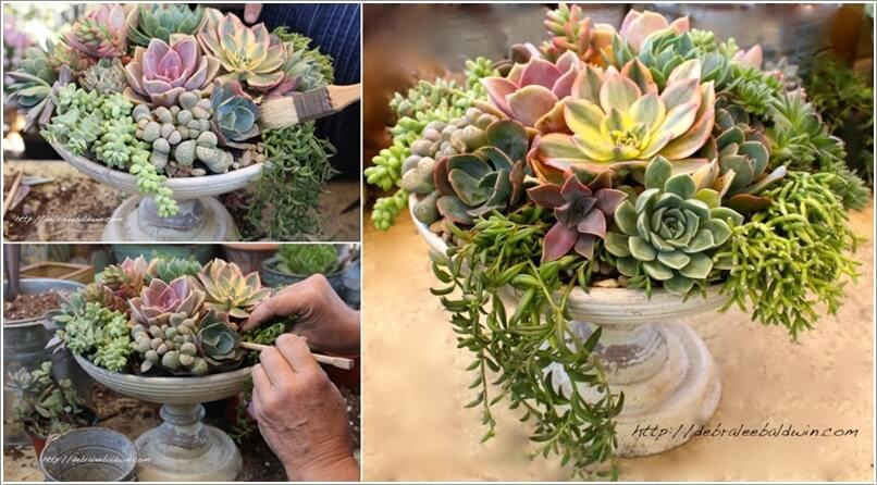 Good 10 Cool Succulent Planter Ideas For Your Home 9