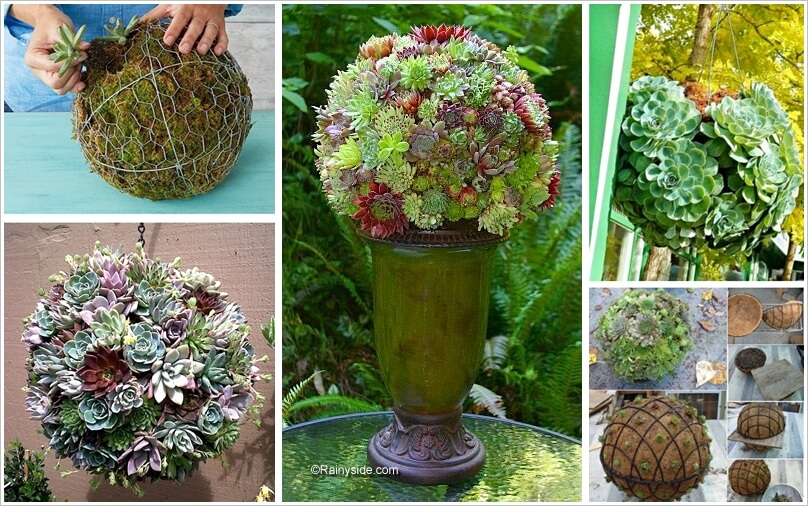 Decorate Your Garden with a Succulent Sphere 1
