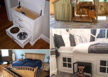 10-cool-diy-pet-projects-for-your-furry-friends-fi