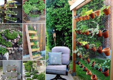 Grow a Wonderful Herb Garden in Your Backyard fi