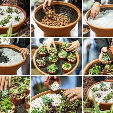 Terracotta Basin Succulent Planter fi