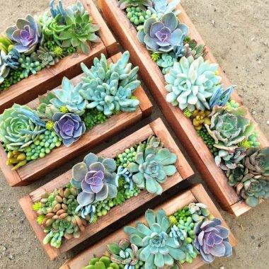 Ways to Display Succulents fi