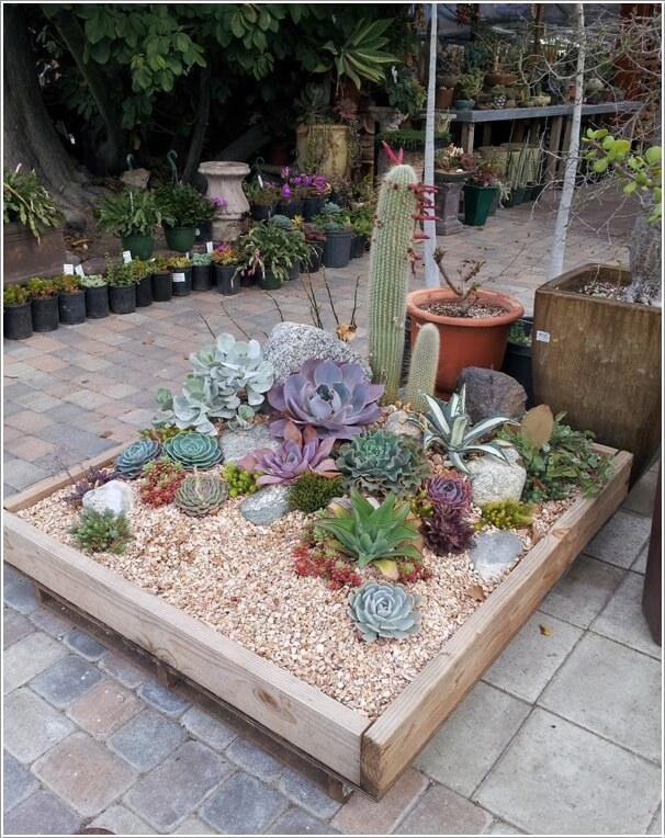 13 beautiful cactus garden ideas