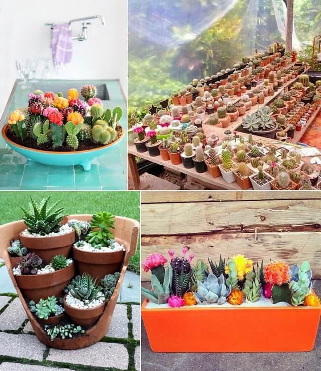 100 Most Creative Gardening Design Ideas 2018: 13 Beautiful Cactus Garden Ideas