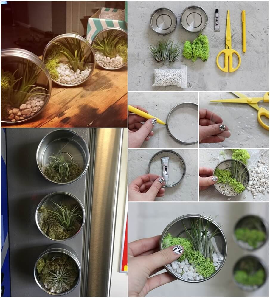 These DIY Terrariums are Simply Stunning