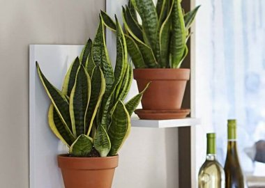 Tips for Adding Plants to a Kitchen
