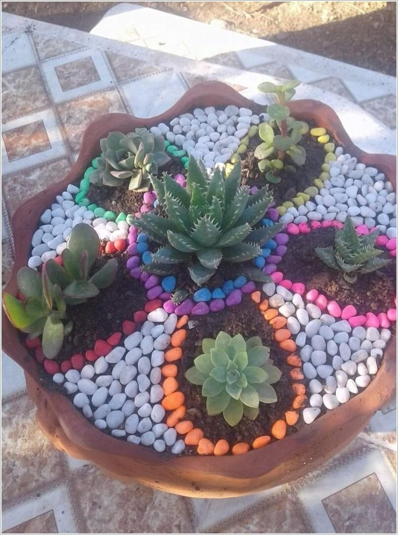 Colorful Succulent Garden Ideas