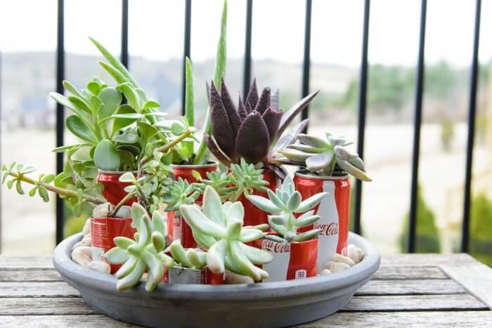 diy tabletop gardens