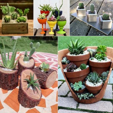 Cactus and Succulent Planter Ideas