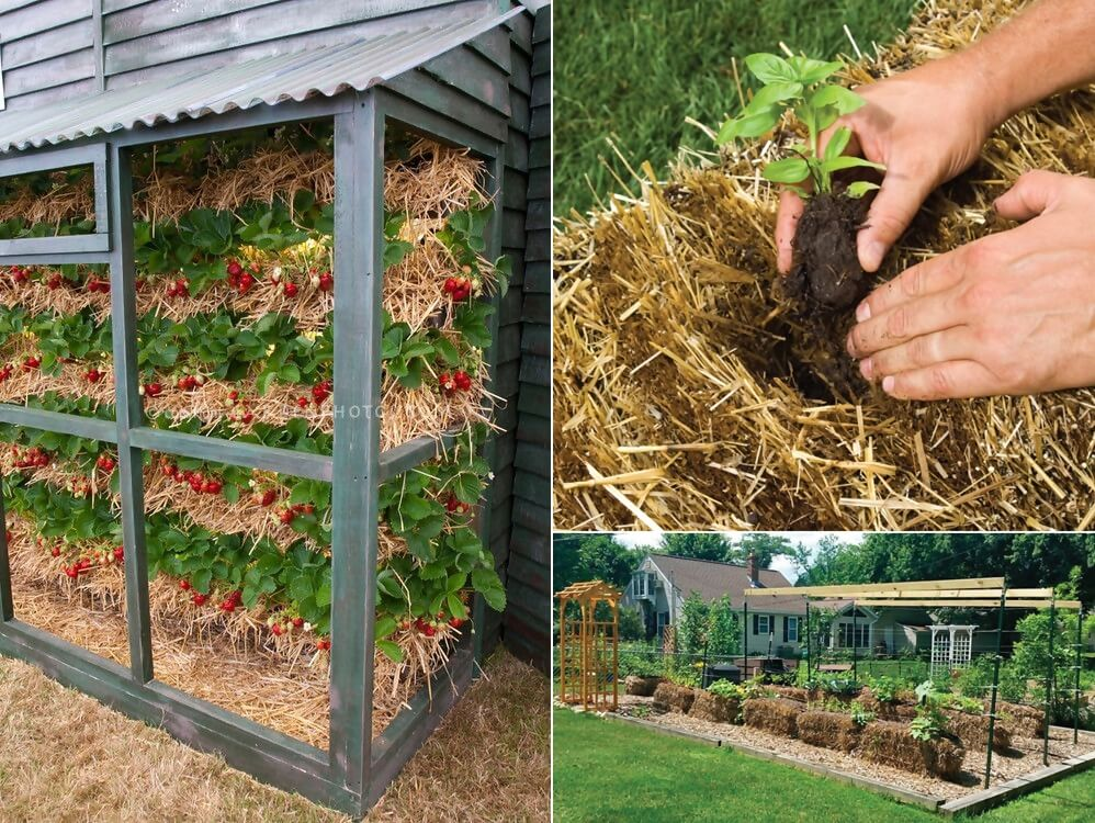 Ideas To Grow Strawberries