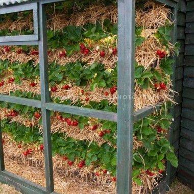 Ideas To Grow Strawberries