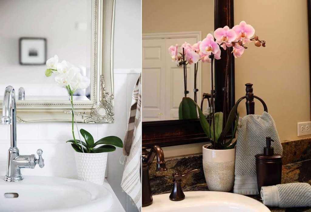 bathroom plants