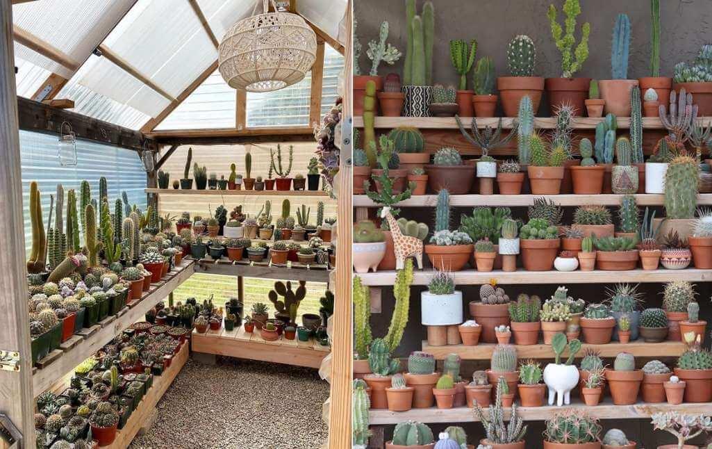 Cactus and Succulent Garden Ideas